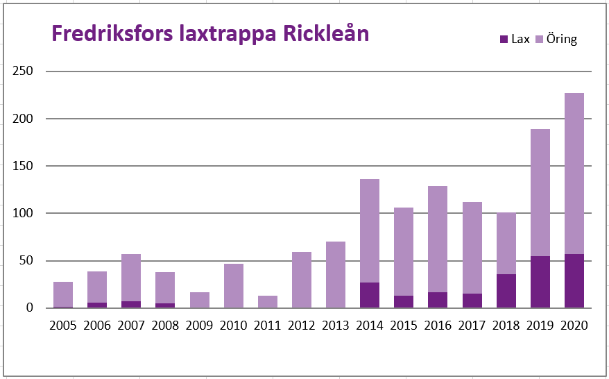 Diagram över fiskvandringen i Fredriksfors, Rickleån mellan 2004-2020