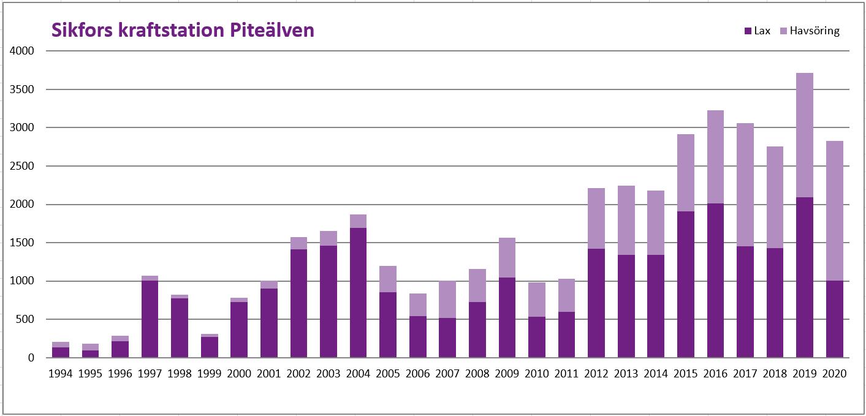 Diagram över fiskvandringen i Sikfors mellan 1992-2020